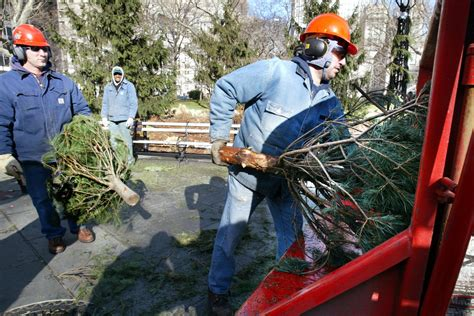 where to recycle or compost your christmas tree in the bay