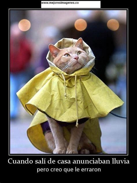 imagenes graciosas para un dia de lluvia imagenes de lluvia con frases graciosas archivos las