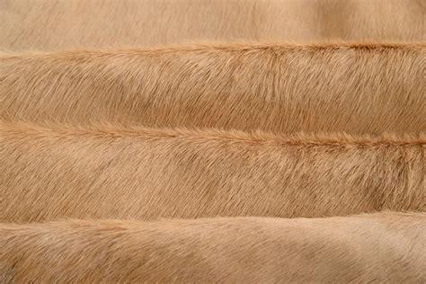 rug hair light beige cow hide hair rug for sale at 1stdibs