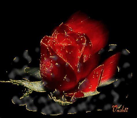imagenes con movimiento y brillo para descargar gratis rosas con brillo flores hermosas lindas hermosas