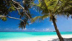 wallpaper gif nature beach background gifs search find make share gfycat gifs