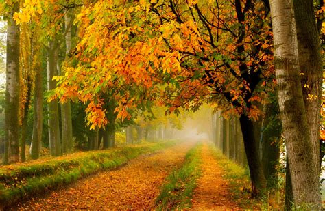 le natur fall colors walk leaves autumn nature trees road forest