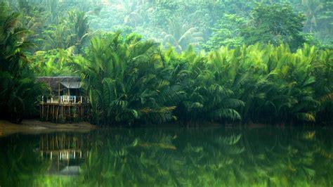 background hutan hutan bakau by fainsan on deviantart