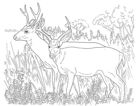 winter deer coloring page 9 free printable deer coloring pages for kids 2016