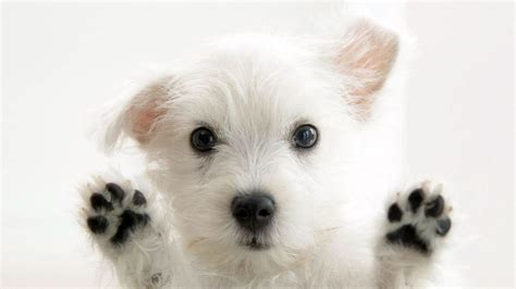 hd dog wallpapers