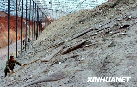 can t last long in bed dinosaur bone bed in zhucheng could be the creatures last stand what s on xiamen