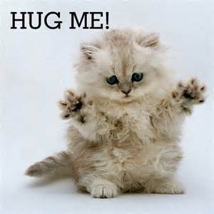 cat hugs hug me cat picture