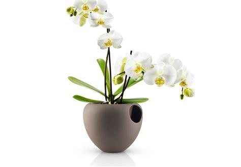 orchidea in da letto un vaso moderno per arredare con le orchidee arredare