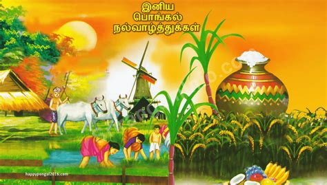 image gallery happy pongal 2016