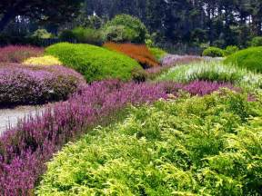 daffodils at the mendocino coast botanical gardens