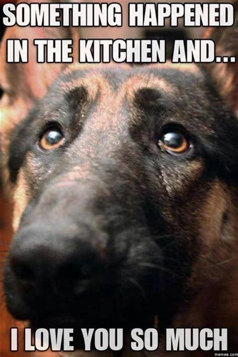 Puppy Face Meme - puppy dog face memes com