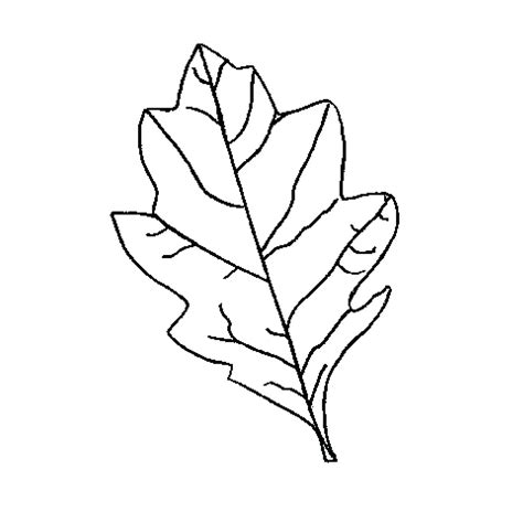 leaf pattern with lines for writing leaf pattern with writing lines theleaf co
