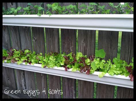 Gutter Garden by Grow Lettuce In Gutter Gardens