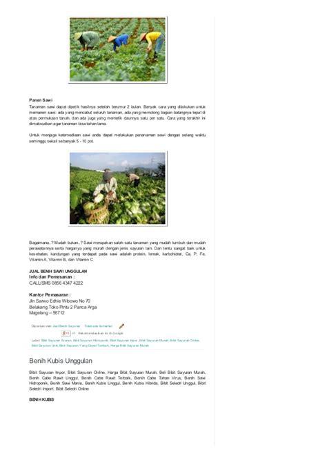 Benih Sayuran Tanam Sayuran 0856 4347 4222 jual benih sayuran benih sayuran unggul
