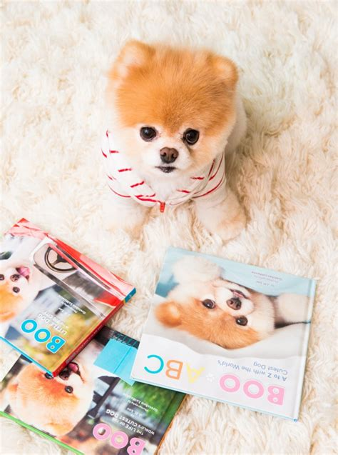Story Book Say Boo To The Animals boo buddy the coveteur coveteur