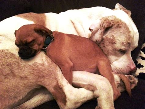 Comfort Animal by A Named Gives Comforting Snuggles To Other