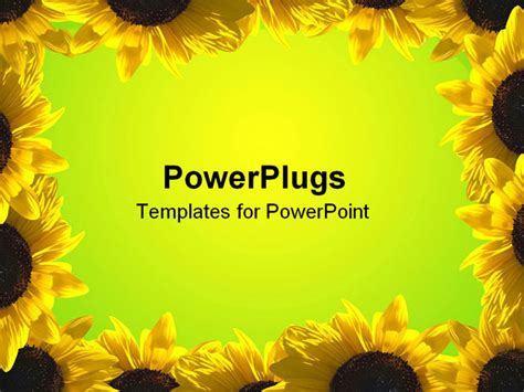 sunflower powerpoint template background borders for powerpoint images