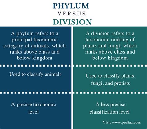 difference  phylum  division definition classification examples