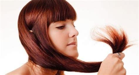 Masker Rambut Bercabang cara mengatasi rambut bercabang secara alami