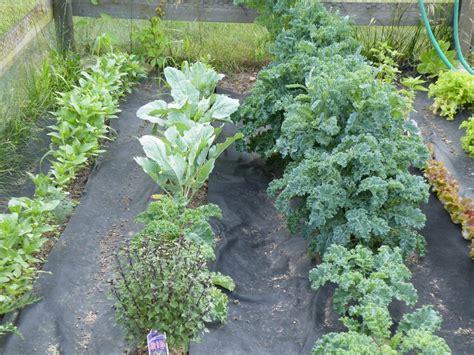 Rows Garden by 2 Garden Rows Creativity Sparks