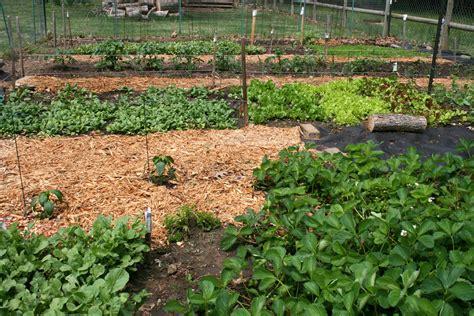 oklahoma gardening backyard vegetable garden in ne