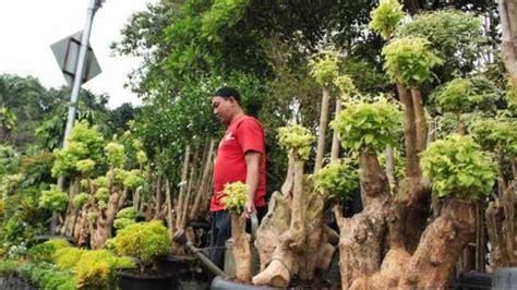 sby borong tanaman hias hingga habiskan rp  juta