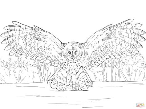 spotted owl coloring page great grey owl flying coloring page free printable