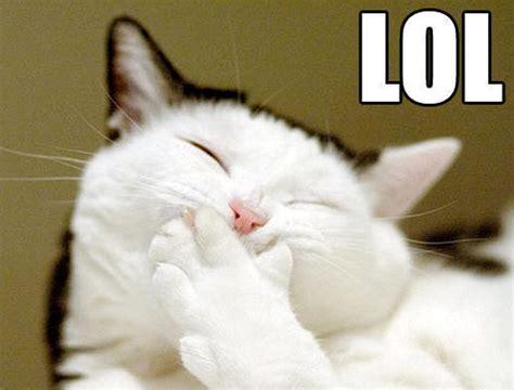 Laughing Cat Meme - laughing cat memes image memes at relatably com