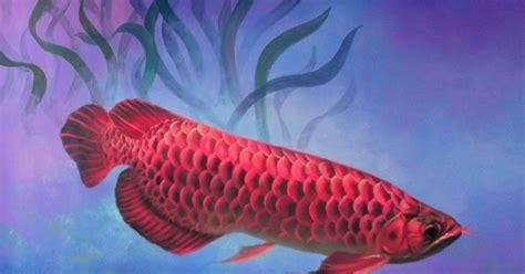 Lukisan Koi Big Myy 16 dunia lukisan javadesindo gallery gt gt koleksi lukisan ikan banyak pilihan berkualitas tinggi