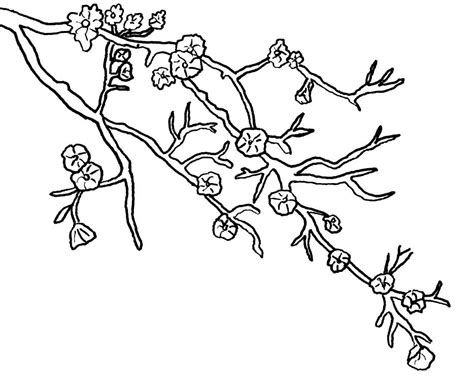 cherry blossom tree coloring pages