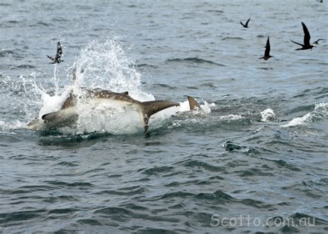 Kaos Wildlife scotto au fishing articles bloggs