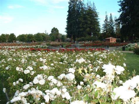 San Jose Garden by Municipal Garden San Jose Ca Top Tips Before You