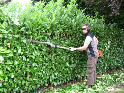 the when and how of pruning and trimming hedges and shrubs