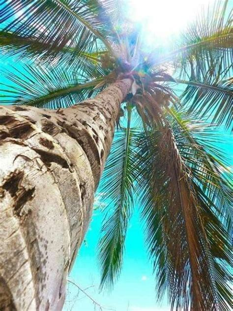 summer vibes palm trees hd 17 best ideas about palm tree island on pinterest