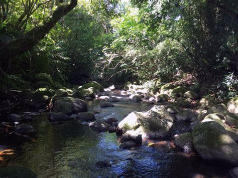 Island Mba Review by Le Lambablanc Bras Panon Reunion Island Foto S