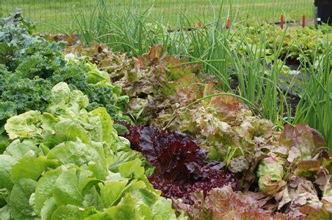 Diskon Veggie Grower As Seen On Tv Vegetable Planter the giving garden a taste of general mills