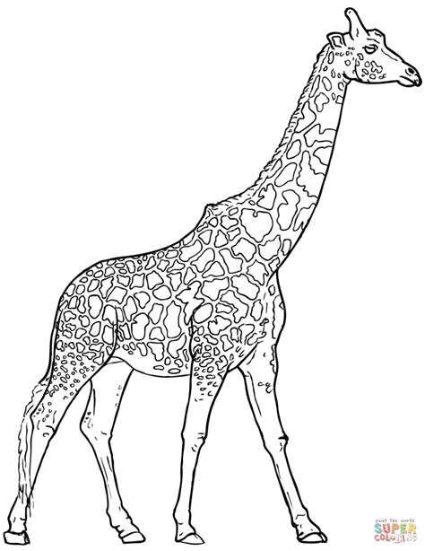 coloring pages of a giraffe get this giraffe coloring pages realistic animals 53182