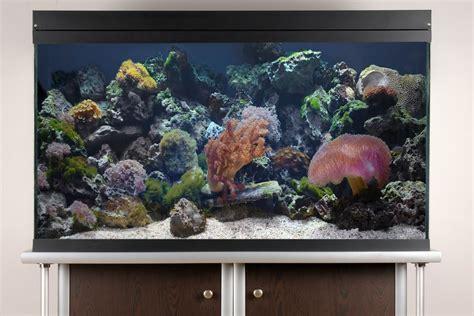Lu Aquarium Model Jepit 10 easy saltwater aquarium set up steps