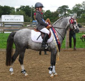 section b welsh pony 1000 ideas about welsh pony on pinterest ponies