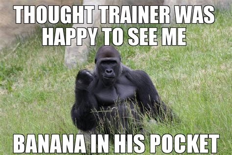 Funny Gorilla Memes - success gorilla s meme s trainer has a banana in his pocket