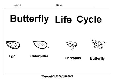 preschool science worksheets free printables butterfly cycle butterfly unit butterfly cycle social studies and