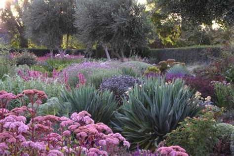 choosing the right plant for the right conditions including drought your easy garden