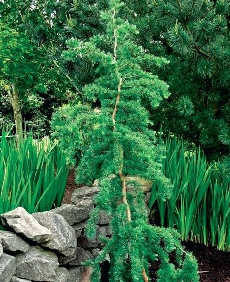 patio zone small landscape trees pleasant small trees for landscaping