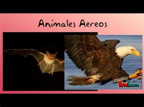 imagenes de animales terrestres animales terrestres acu 225 ticos a 233 reos carn 237 voros y