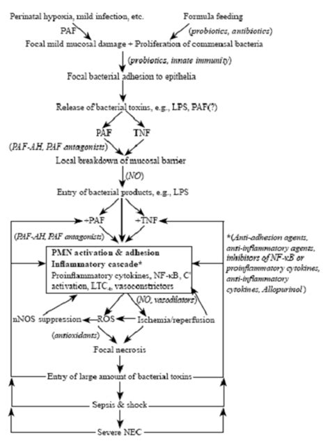 septic shock pathophysiology flowchart septic shock pathophysiology flowchart best free