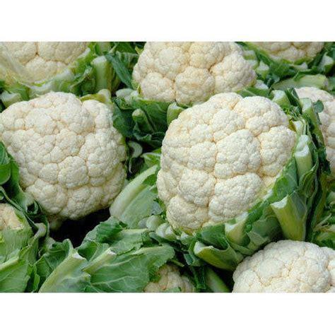Cauliflower Fresh fresh vegetable fresh cauliflower wholesale trader from