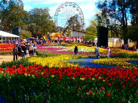 when is in australia when the flowers are but beautiful canberra