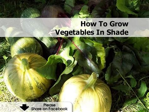 vegetables that grow in shade how to grow vegetables in shade