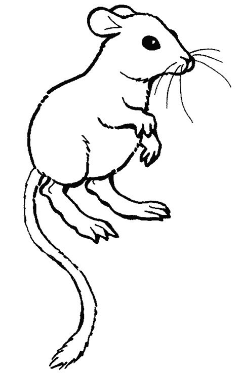 gerbil coloring free animal coloring pages sheets gerbil