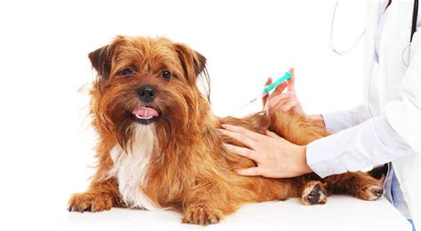 cortisone for dogs cortisone for dogs a guide